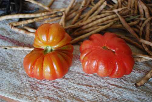 BEN_100225_014505_tomaten