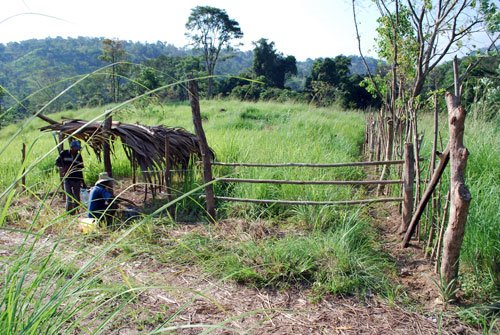 cow_area_fence_gate
