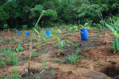wasserfaesser_bananengarten
